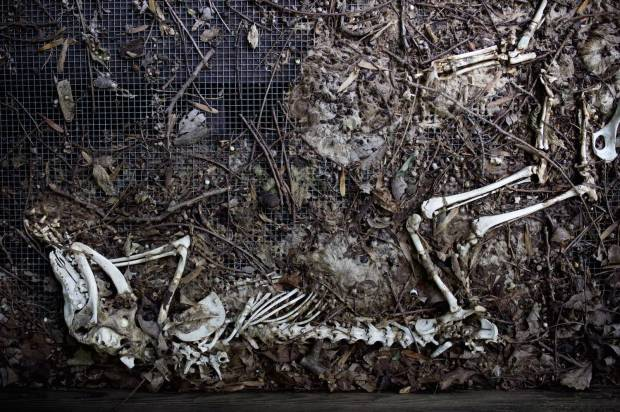 bones by Cody Orrell